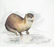 Hearding-Island-Otter-