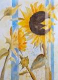 Azmitia-M-2020-Majestic-Sunflower