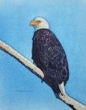 DillonC-202105-Eagle-canvas-11x14-250