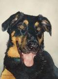 DillonC-202105-Zeus.commission.dog-9x12