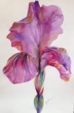 Bloom-201507-Iris