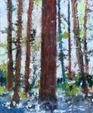 RauschenfelsS-202102-Cedars-Glory-15x20-matted-and-framed-250